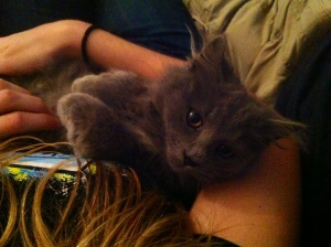 And this is Lint.  She wanted to be held like a baby.  I was not about to refuse that little face.